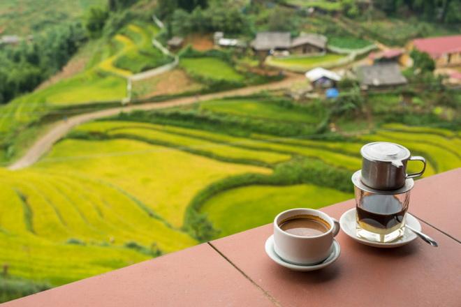 Что следует знать о культуре кофе во Вьетнаме?