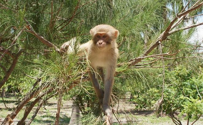 Остров обезьян – достопримечательность Нячанга
